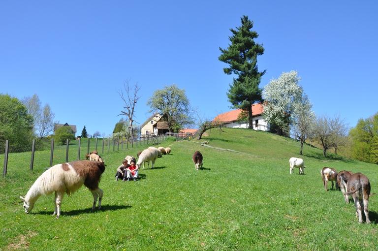 Blick auf das schöne Hügelland der Südsteiermark und über den Garten des Weiberhof. / Foto: Weiberhof